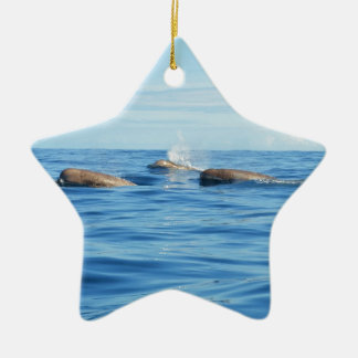 North Atlantic Bottlenose Whales Christmas Ornament