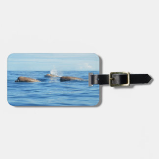 North Atlantic Bottlenose Whales Luggage Tag