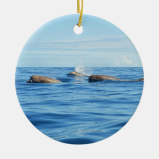 North Atlantic Bottlenose Whales Round Ceramic Decoration