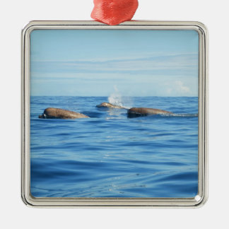 North Atlantic Bottlenose Whales Silver-Colored Square Decoration