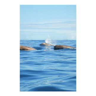 North Atlantic Bottlenose Whales Stationery