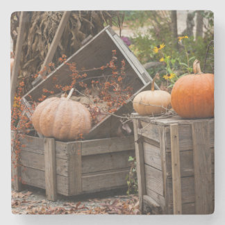 North Carolina, Linville, autumn pumpkins Stone Coaster