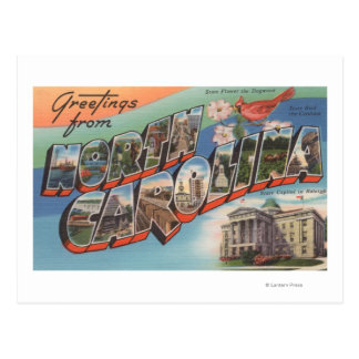 North Carolina State Flower Bird Post Card