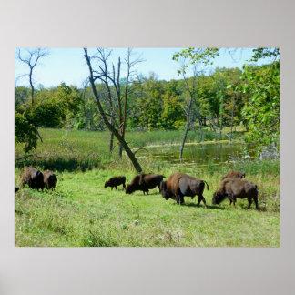 North Dakota Bison Poster