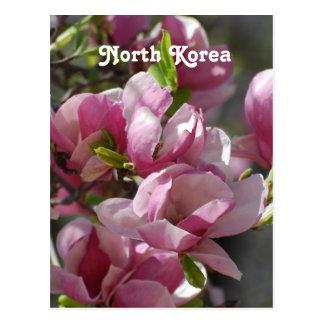 North Korea Magnolia Postcard