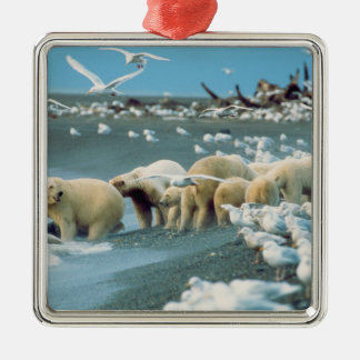 North Slope, Alaska. Polar Bears Ursus Christmas Ornament