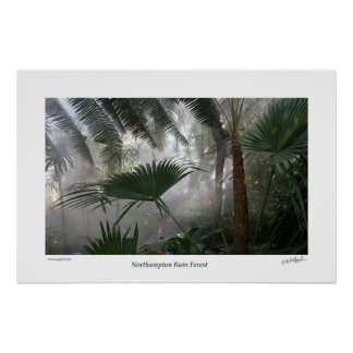 Northampton Rain Forest I Posters