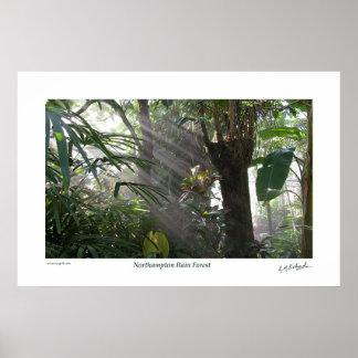 Northampton Rain Forest III Poster