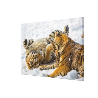 Northeast Tiger Canvas Print