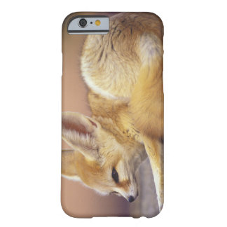 Northern Africa. Fennec Fennecus zerda) Barely There iPhone 6 Case