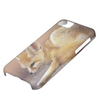 Northern Africa. Fennec Fennecus zerda) iPhone 5C Case