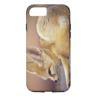 Northern Africa. Fennec Fennecus zerda) iPhone 8/7 Case