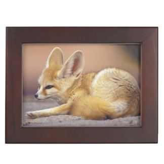 Northern Africa. Fennec Fennecus zerda) Keepsake Box