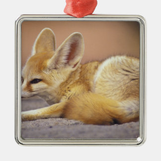 Northern Africa. Fennec Fennecus zerda) Silver-Colored Square Decoration