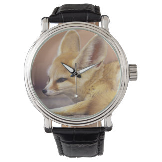 Northern Africa. Fennec Fennecus zerda) Watch