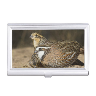 Northern Bobwhite quail babies at pond for drink Business Card Holder