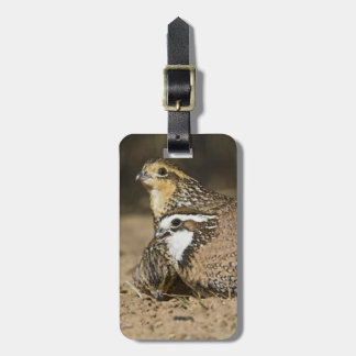 Northern Bobwhite quail babies at pond for drink Luggage Tag