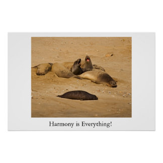 Northern California elephant seals Poster