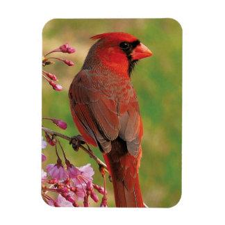 Northern Cardinal 2 Rectangular Photo Magnet