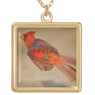 Northern Cardinal adult male in flight Gold Plated Necklace