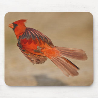 Northern Cardinal adult male in flight Mouse Mat