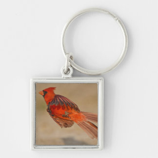 Northern Cardinal adult male in flight Silver-Colored Square Key Ring