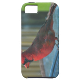 northern cardinal bird case for the iPhone 5