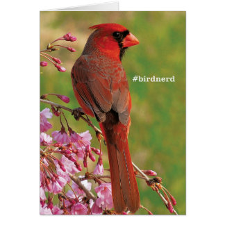 Northern Cardinal Card