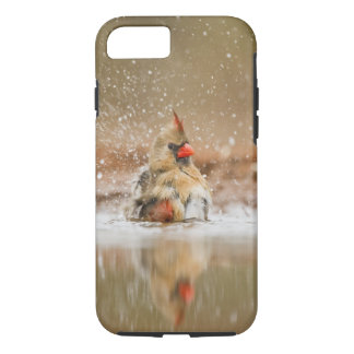 Northern Cardinal (Cardinalis cardinalis) female 2 iPhone 8/7 Case