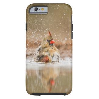 Northern Cardinal (Cardinalis cardinalis) female 2 Tough iPhone 6 Case