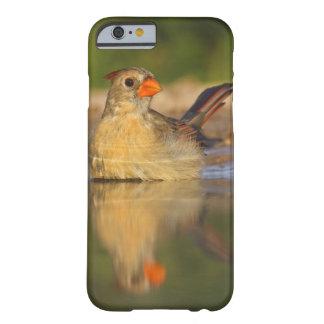 Northern Cardinal (Cardinalis cardinalis) female 3 Barely There iPhone 6 Case