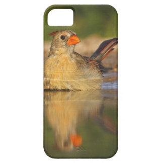 Northern Cardinal (Cardinalis cardinalis) female 3 iPhone 5 Covers