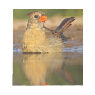 Northern Cardinal (Cardinalis cardinalis) female 3 Notepad
