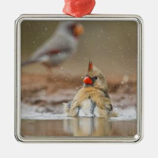Northern Cardinal (Cardinalis cardinalis) female Christmas Ornament