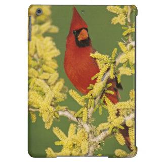 Northern Cardinal, Cardinalis cardinalis,male Case For iPad Air