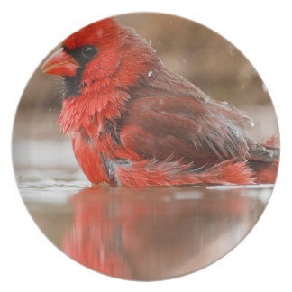 Northern Cardinal (Cardinalis cardinalis) male Dinner Plate