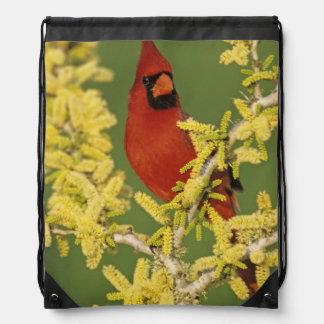 Northern Cardinal, Cardinalis cardinalis,male Drawstring Bag