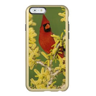 Northern Cardinal, Cardinalis cardinalis,male Incipio Feather® Shine iPhone 6 Case