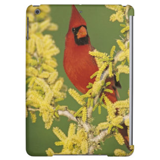 Northern Cardinal, Cardinalis cardinalis,male iPad Air Cover