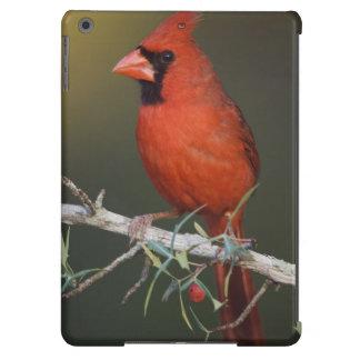 Northern Cardinal, Cardinalis cardinalis, male iPad Air Cover