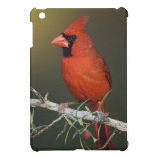 Northern Cardinal, Cardinalis cardinalis, male iPad Mini Case