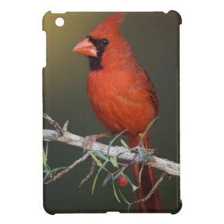 Northern Cardinal, Cardinalis cardinalis, male iPad Mini Cases