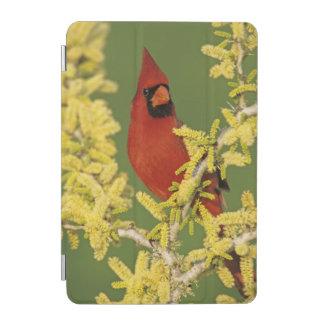 Northern Cardinal, Cardinalis cardinalis,male iPad Mini Cover