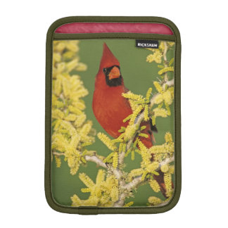 Northern Cardinal, Cardinalis cardinalis,male iPad Mini Sleeve