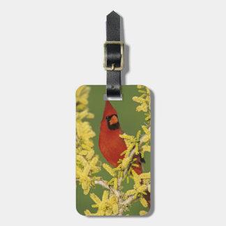 Northern Cardinal, Cardinalis cardinalis,male Luggage Tag