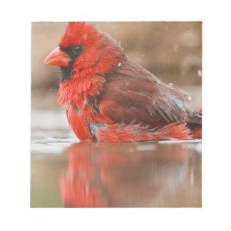 Northern Cardinal (Cardinalis cardinalis) male Notepad