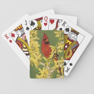 Northern Cardinal, Cardinalis cardinalis,male Playing Cards