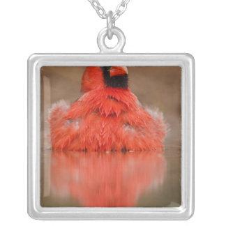 Northern Cardinal Cardinalis cardinalis) male Square Pendant Necklace