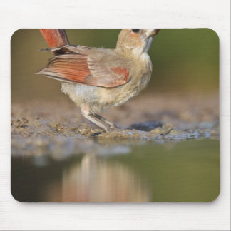 Northern Cardinal Cardinalis cardinalis) Mouse Mat