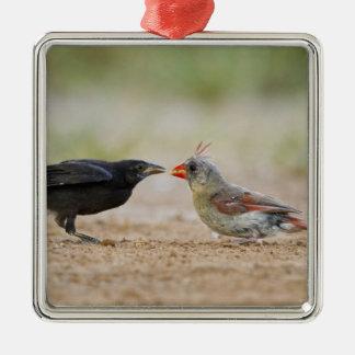 Northern Cardinal feeding baby cowbird Christmas Ornament